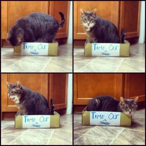 Cat Timeout