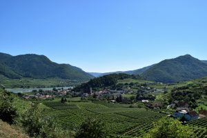 austrian-vineyard-2